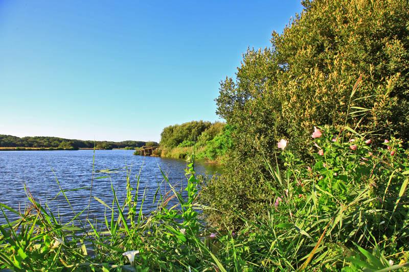 chemin balisé à Messanges, balade à pied autour de l'étang de moïsan