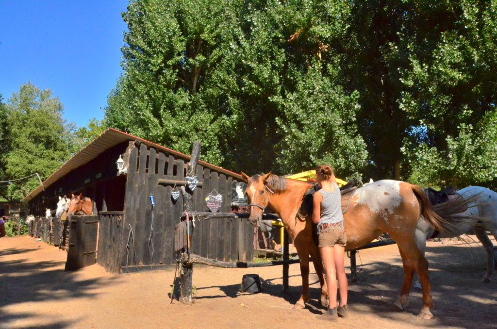 cnetre-equestre